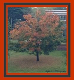 Autumn Tree - 02